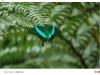 elma_duric_priroda_harmonija