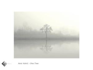 Amir_Kehic_one_tree