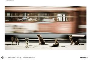 Edin_Tuzlak_Kreativna-fotografija_Psi_laju_-tramvaji_-prolaze