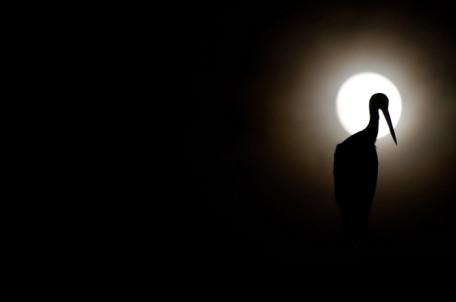 Andrija Vrdoljak Roda i mjesec