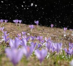 Denis Ruvić Priroda Dolazak proljeća