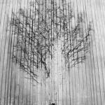 Alen Đozgić - Brilliant Trees // Kreativna fotografija
