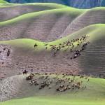 Chi-Lai  Huang - Pastureat the Tops // Kreativna fotografija
