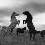 Dejan Selaković - Divlji konji // Priroda i okoliš