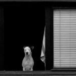 Kiril Štrkov - Pas sa stavom// Portret