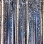 Andreja Ravnak - Mobile phone photography - Blue forest